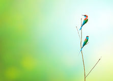 Pájaro en la rama en un prado del bosque Fotografía de archivo