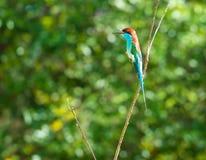 Pájaro en la rama en un prado del bosque Fotos de archivo