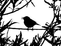 Pájaro en la ramificación ilustración del vector