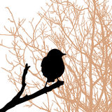 Pájaro en la ramificación libre illustration