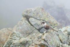 Pájaro en la roca Fotografía de archivo libre de regalías