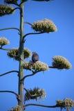 Pájaro en la tapa del árbol Foto de archivo