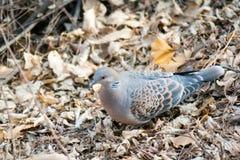 Pájaro en la tierra foto de archivo