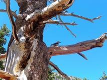 Pájaro en las montañas rocosas Imagen de archivo libre de regalías