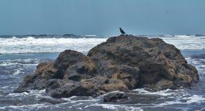 Pájaro en las rocas Imagenes de archivo