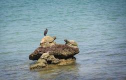 Pájaro en las rocas en el océano del mar de la costa de la bahía imagen de archivo libre de regalías