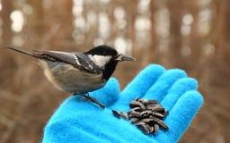 Pájaro en mi mano Foto de archivo libre de regalías