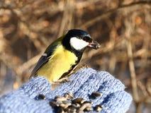 Pájaro en mi mano Imagen de archivo libre de regalías