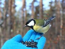 Pájaro en mi mano fotografía de archivo