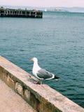 Pájaro en muelle Imagen de archivo