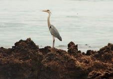 Pájaro en Namibe, Angola imagenes de archivo