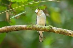 Pájaro en naturaleza Fotos de archivo