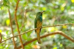 Pájaro en naturaleza Fotografía de archivo