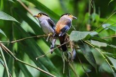 Pájaro en naturaleza Foto de archivo libre de regalías