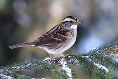 Pájaro en nieve Fotografía de archivo libre de regalías