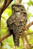 Pájaro en pajarera Imagenes de archivo