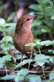Pájaro en parque Fotos de archivo