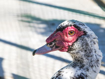 Pájaro en parque zoológico Imágenes de archivo libres de regalías