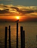 Pájaro en perca en la puesta del sol Foto de archivo