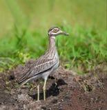 Pájaro en prado Fotos de archivo libres de regalías