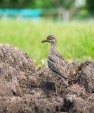 Pájaro en prado Imagenes de archivo