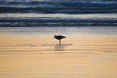 Pájaro en puesta del sol Imagen de archivo libre de regalías