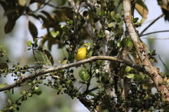 Pájaro en rama Foto de archivo libre de regalías
