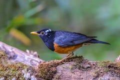 Pájaro en rama Fotos de archivo