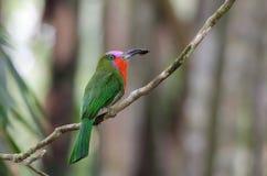 Pájaro en rama Fotografía de archivo