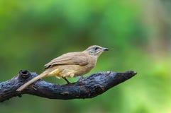 Pájaro en rama Fotos de archivo libres de regalías