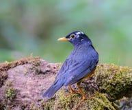 Pájaro en rama Foto de archivo