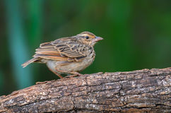 Pájaro en rama Imagenes de archivo