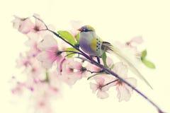Pájaro en rama del flor Foto de archivo
