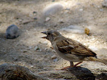Pájaro en rama en la tierra Imagen de archivo