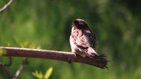 Pájaro en rama en Odessa, Ucrania Fotos de archivo