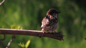Pájaro en rama en Odessa, Ucrania Imagenes de archivo