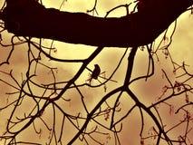 Pájaro en silueta del árbol Fotos de archivo libres de regalías