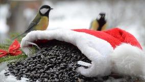 Pájaro en sombrero del ` s de Papá Noel con las semillas para la Navidad