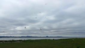 Pájaro en su hábitat natural metrajes