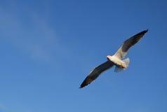 Pájaro en Suecia Imagen de archivo libre de regalías