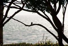 Pájaro en un árbol Foto de archivo libre de regalías