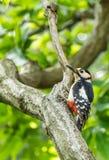 Pájaro en un árbol Imagenes de archivo