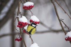 Pájaro en un árbol Fotografía de archivo libre de regalías