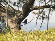 Pájaro en un árbol Imagen de archivo libre de regalías