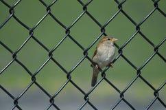 Pájaro en un alambre Foto de archivo libre de regalías