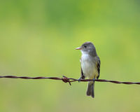 Pájaro en un alambre Imagen de archivo