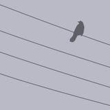 Pájaro en un alambre stock de ilustración