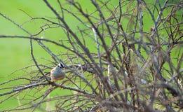 Pájaro en un arbusto Imagen de archivo libre de regalías