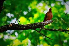 Pájaro en un miembro Imagenes de archivo