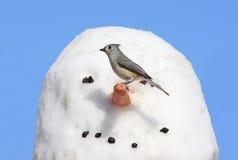 Pájaro en un muñeco de nieve Fotos de archivo libres de regalías